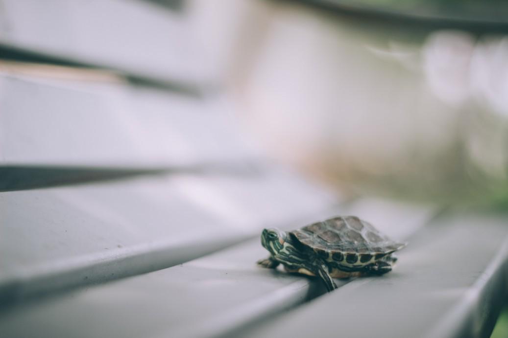 animal-animal-photography-blur-789141 (1) (1)